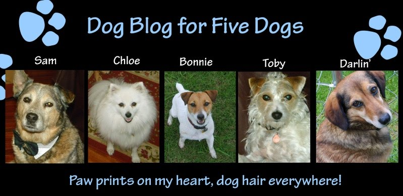Dog Blog for five dogs