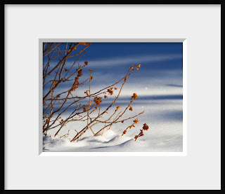 A framed photo of a mountain mahogany bush with its russet winter leaves contrasts with the soft tones of a fresh snow in Colorado.