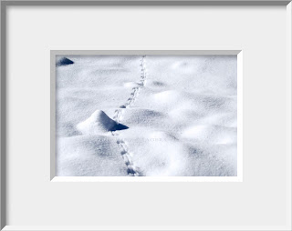 A framed photo of tiny tracks of a forest mouse venture out to explore on a sunny winter day.