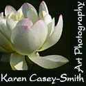 Logo button for Karen Casey Smith