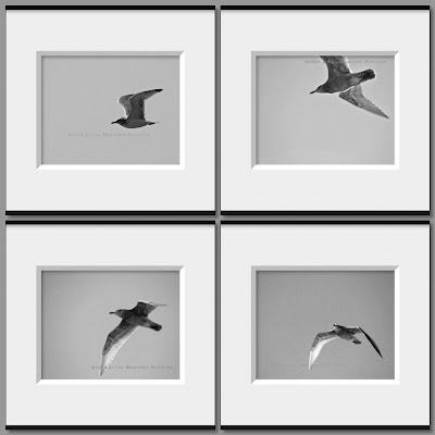 Set of 4 black and white seagull photos