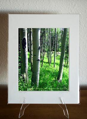 A matted photograph of an aspen glen.