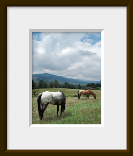 Appaloosa horses grazing in a green mountain valley.