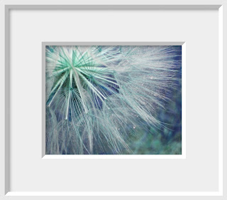 A common seedhead is transformed into sparkling fireworks in blue, green, aqua and lavender.
