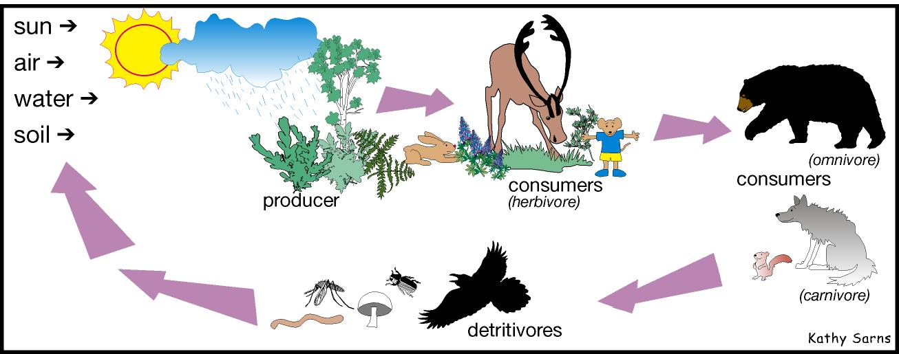 food web examples. images a food web; an example