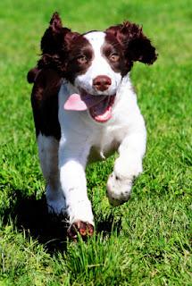 http://3.bp.blogspot.com/_B3zqLQT4SFA/R4kpqXSS5II/AAAAAAAAAW8/Taz_8pgnMm0/s320/perros+0024+-+perro+corriendo.jpg