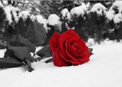 Amor é fogo que arde sem se ver...