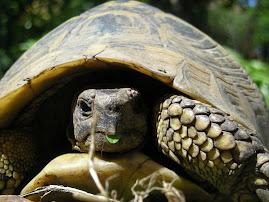 il risveglio delle tartarughe