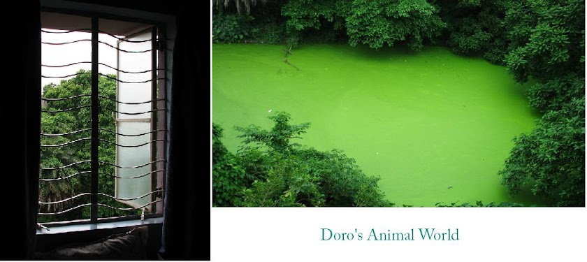 Doro's Animal World