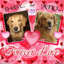[002_Milo+&+Daisy+LOVE]