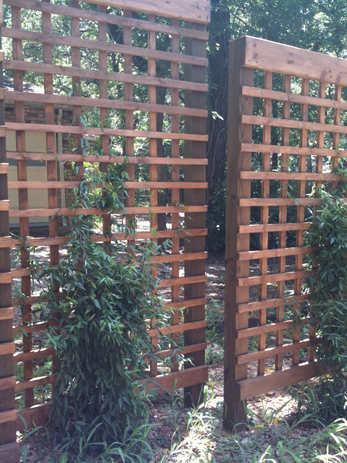 Trellis Ideas For Privacy - Diy embracing the idea how hard can it be