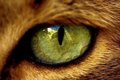 Очите са издайни, казват дори това, което искаш да премълчиш