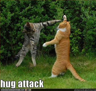 cat-hug-5.jpg