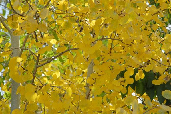 Xanthophyll: a ... Xanthophyll Pigment