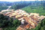 Illegal Logging Riau
