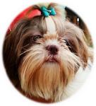 Fergie Puppys Of Br Sttimer