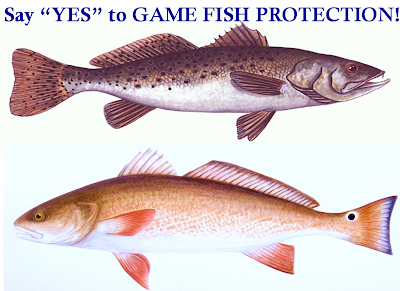 Coastal fisheries reform group game fish status for for South carolina saltwater fish species