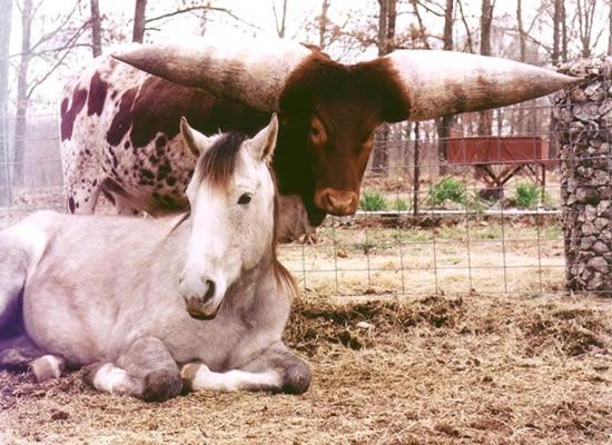 largest horns pics