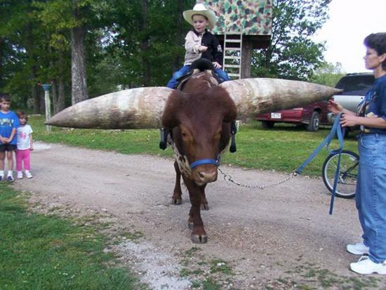 largest horns photos