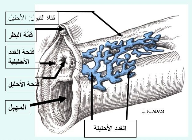 صور فرج المراة http://sehawejamal.blogspot.com/2012/08/blog-post_9.html