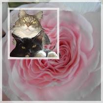 Rosen & Katzen