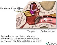 Proceso del sonido y sistema auditivo
