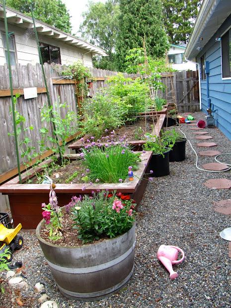 gardener in progress side yard