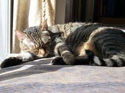 La Michi ahora duerme mucho. También sueña ella