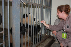 Me...feeding a panda in China