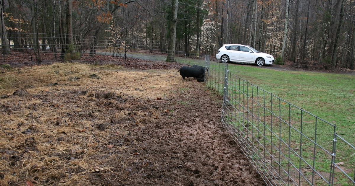 A Tiny Homestead: Pigs an asset to the garden? You Bet!