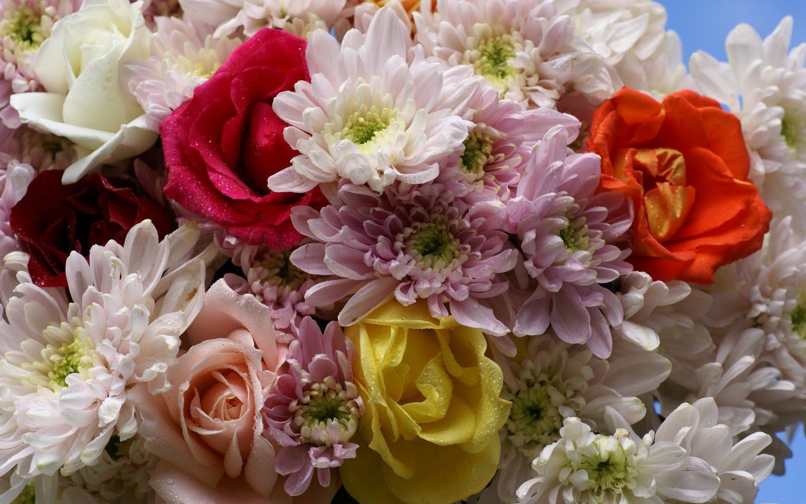 http://3.bp.blogspot.com/_BEyQraI-KQQ/SxSwtsRS32I/AAAAAAAADtM/pOm1jmng0FE/s1600/roses-dsc01913.jpg