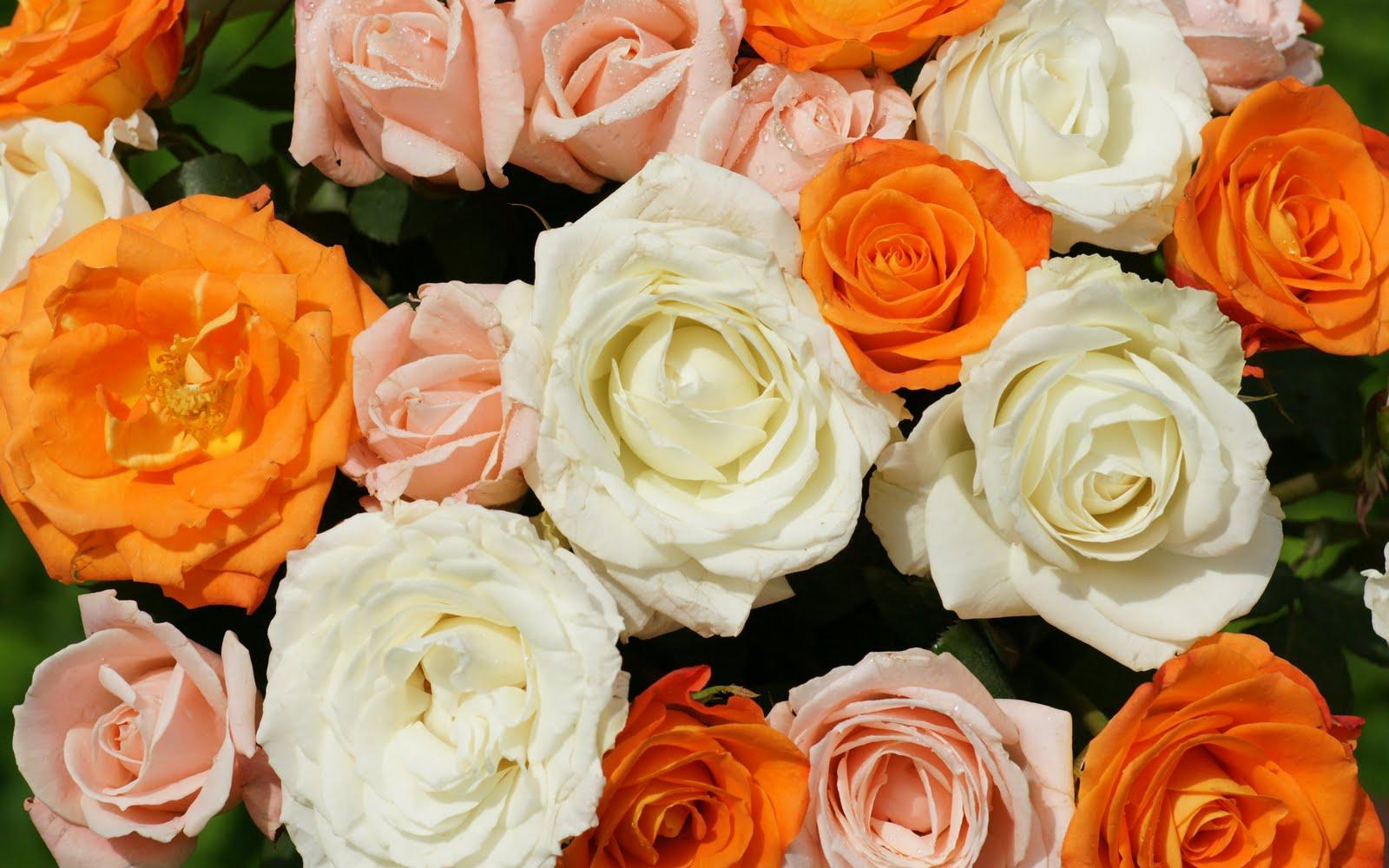 http://3.bp.blogspot.com/_BEyQraI-KQQ/SxSxSx0FXqI/AAAAAAAADuE/nOuNXrScsp8/s1600/beautiful-roses-dsc03390-ws.jpg