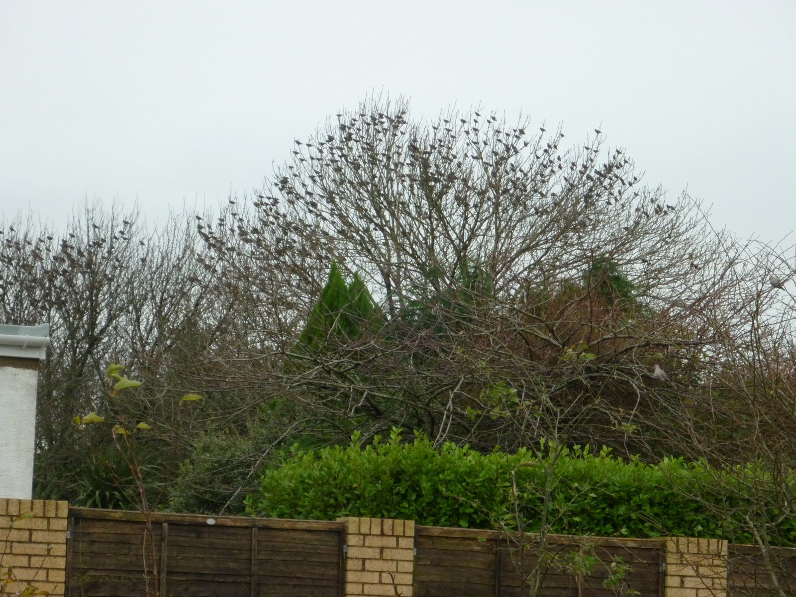 Pembrokeshire Birds  November 2009