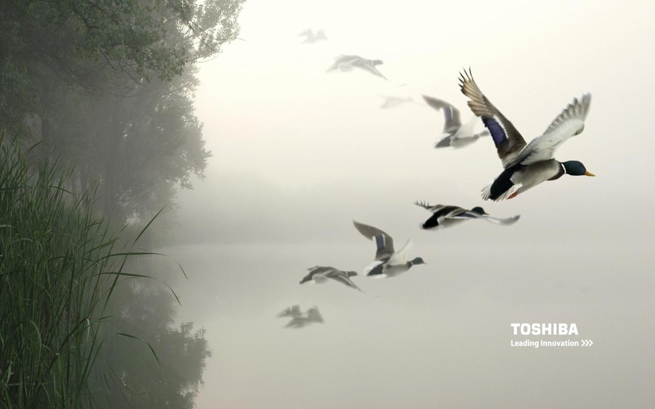 http://3.bp.blogspot.com/_BFYlnQUsPgo/TN2KnW7m-UI/AAAAAAAAAkI/OC_Ka2aHPe8/s1600/toshiba-birds-in-the-air-1280x800-wallpaper-467.jpg