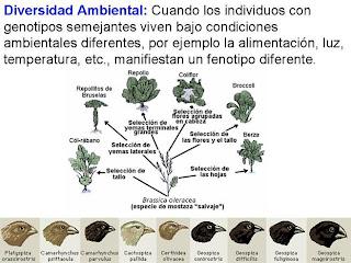Diversidad ambiental humana