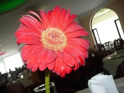yo vengo regando flores...