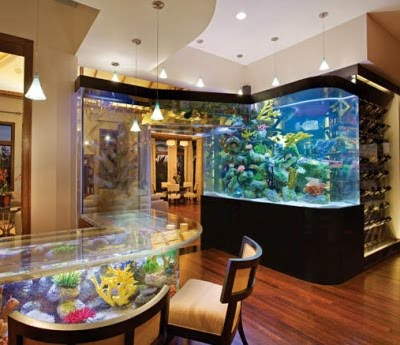 Aquarium Decor Aquariums For Home Decoration