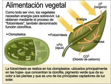 Funcion del dixido de carbono en la fotosintesis 81