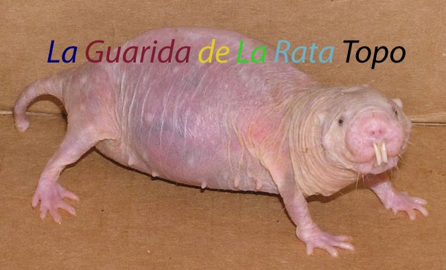 La guarida de la Rata Topo. El azote de la sociedad
