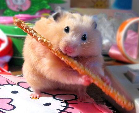 [hamster2.jpg]