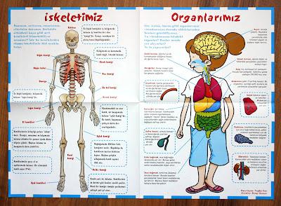 iskelet-icorganlar-poster