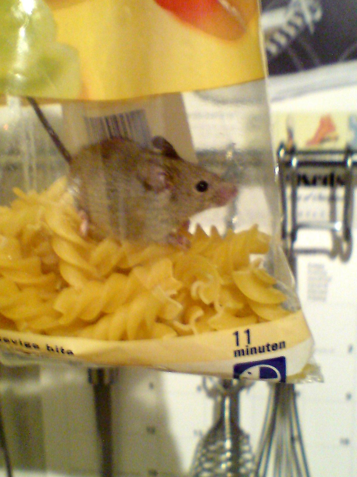 fusilli mouse 3