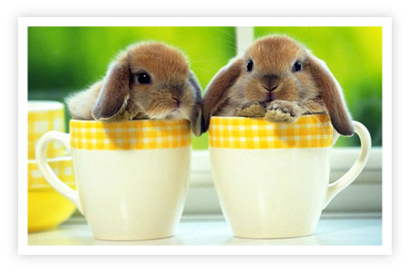 some pictures and a video of bunnies in cups!