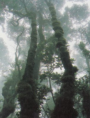Montane forest