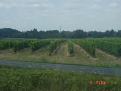 Виноградники Долины Луары