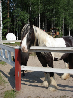 Полюбоваться на чудесного конягу