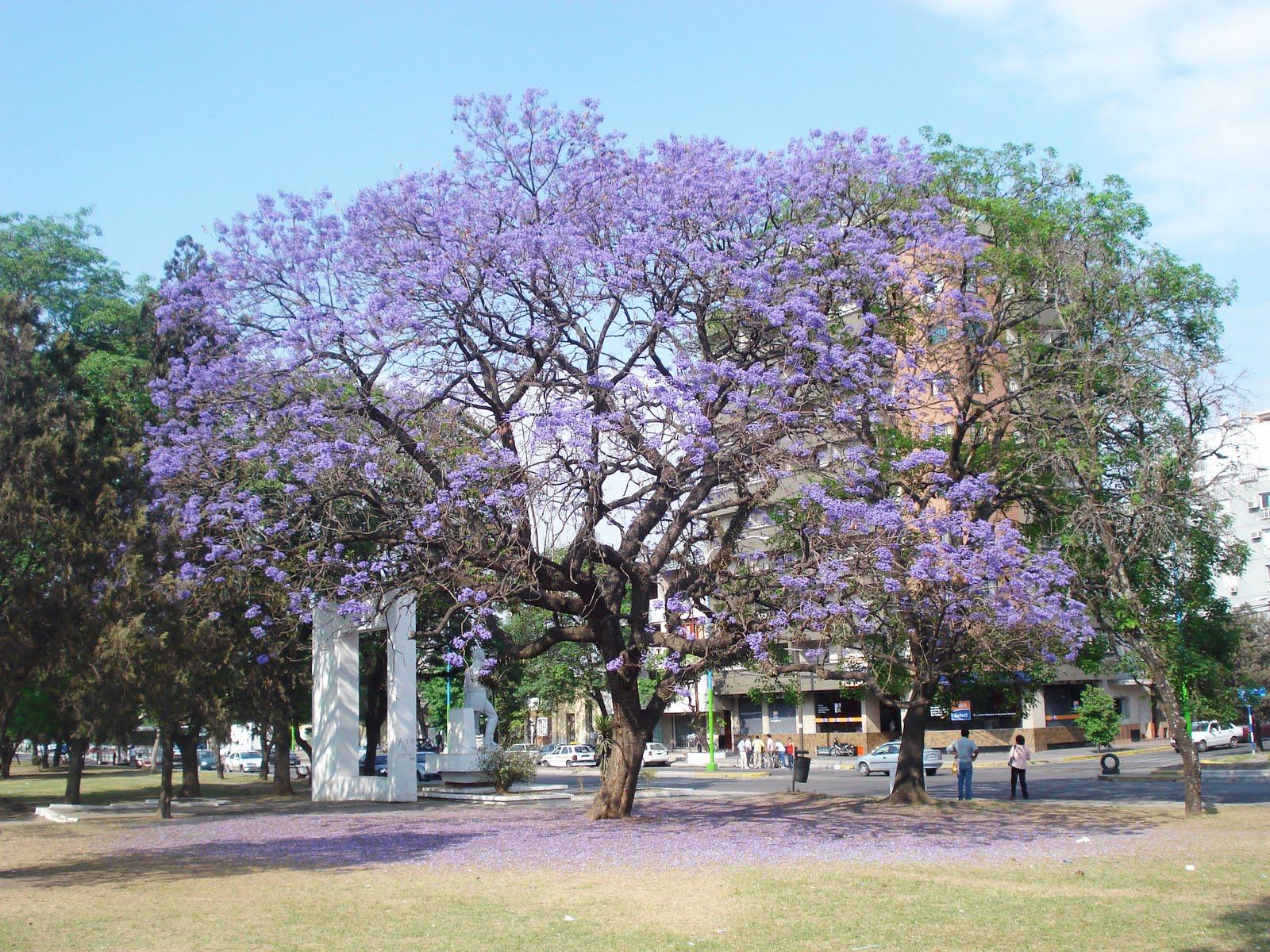 M s rboles para una mayor calidad de vida en la ciudad for Arboles perennes en argentina