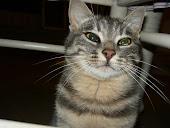 La nostra gatta