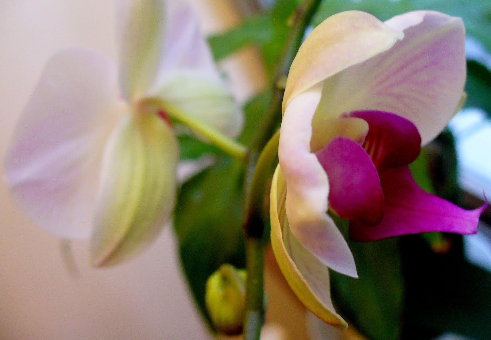 [Orchid2JPG]