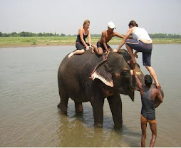 Jungle Safari In chitwan